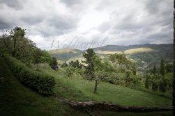 tuscany_villa_wedding3-5-14_041