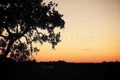apulia-puglia-jewish-wedding-italy_047