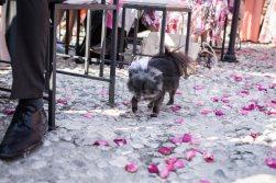 amazing-garda-civil-wedding-07
